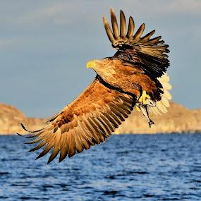 by Roald Heirsaunet - Animals Birds