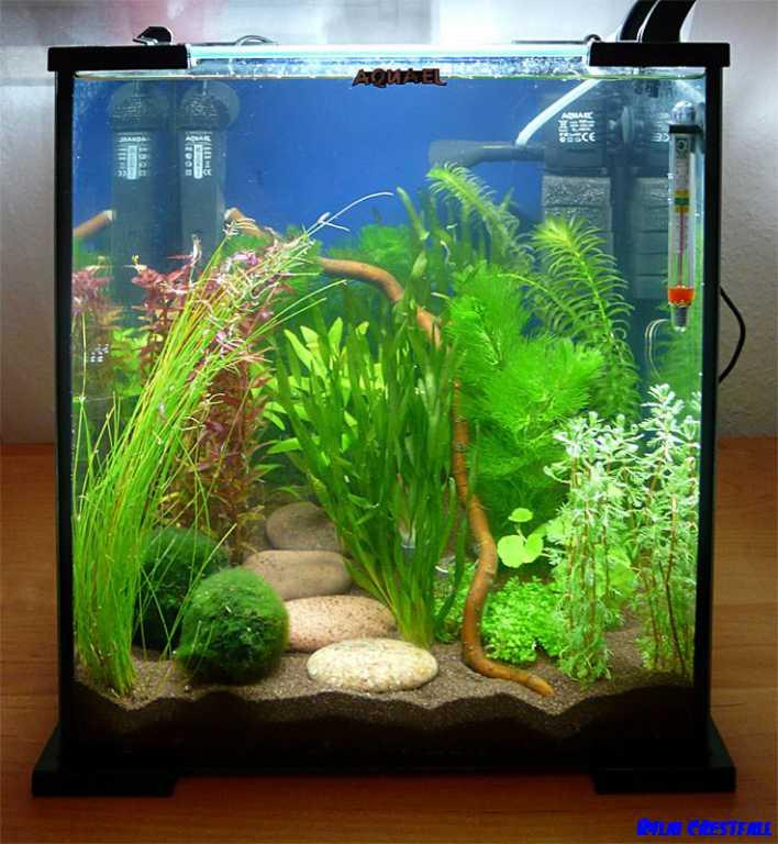 Aquarium Design Ideas- screenshot