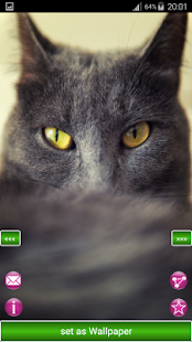 Distinctive cats Wallpapers - náhled