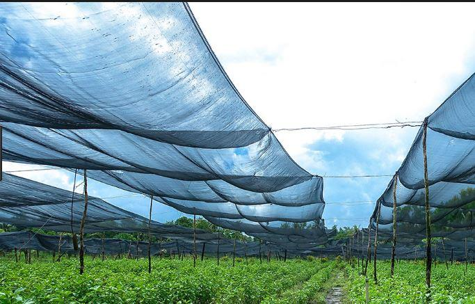 Kết quả hình ảnh cho bán lưới che nắng