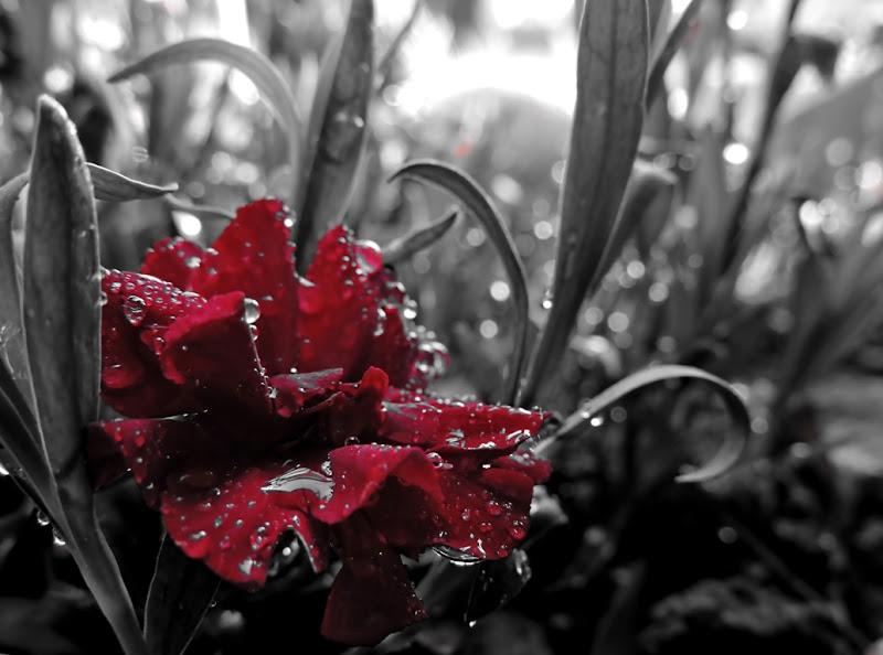 Pioggia, Acqua e Vita di ayrton73