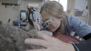 Lynx Be a Lady thumbnail