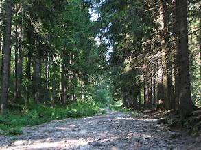 Photo: Czarny szlak z Karpacza w kierunku Śnieżki