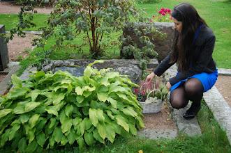Photo: Vilja Pylsy asetti kukat F. E. Sillanpään vanhempien Miinan ja Pransun haudalle. Hautakivi on Kierikkalasta.