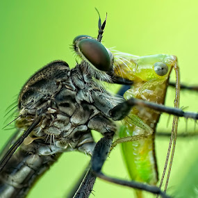 Death Kissin' by Yan Kebak - Animals Insects & Spiders