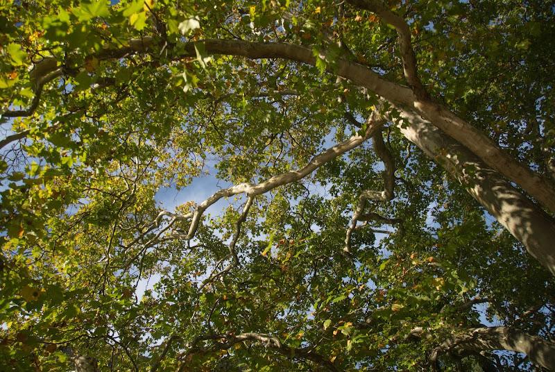 All'ombra di un grande albero di -Os-