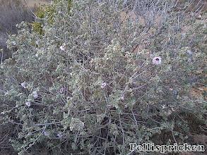 Photo: jag hittar en blommande buske