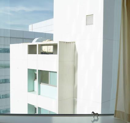 White Window di Eleonork