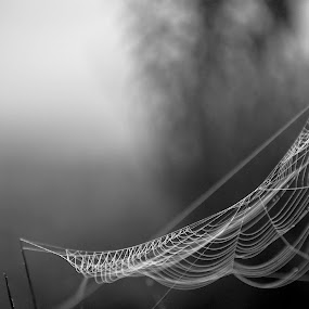 by Patti Cooper - Nature Up Close Webs ( black and white, web, spider web,  )