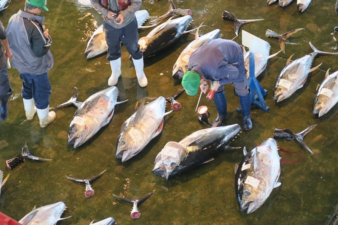 Kii-Katsuura Fish Market