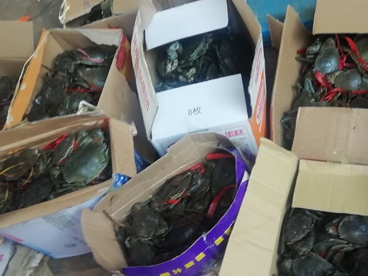 Mud crabs, abalone and sea cucumbers seized in Cyrildene.