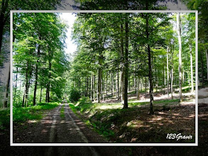 Photo: Piste forestière au Grand Mittelberg