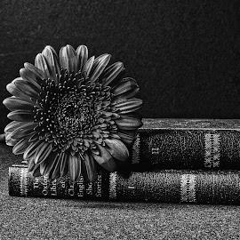 B&W flower 04 by Michael Moore - Black & White Flowers & Plants