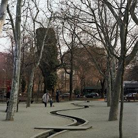 Icoanei Park by Adrian Popescu - City,  Street & Park  City Parks ( film, curve, park, trees, line, river )