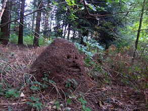 Photo: Le Vintrou(81), entre Montagne Noire et Sidobre (sept 2011)