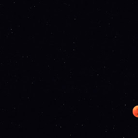 Mars and the Bloodmoon by Clarissa Human - Landscapes Starscapes ( fullmoon, nature, mars, blood moon, stars,  )