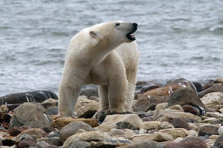 Imagen que contiene exterior, oso, rock, animal  Descripción generada automáticamente