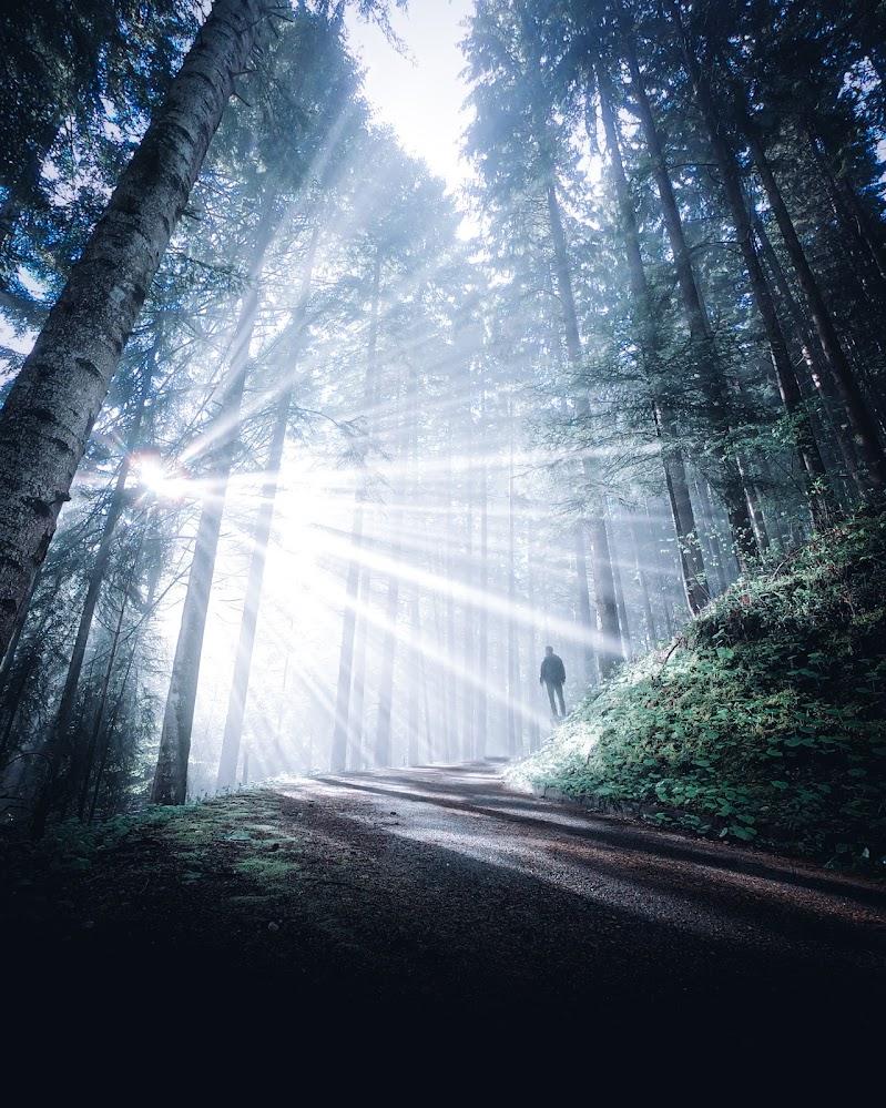 Le luci nel bosco di GiorgioDubini