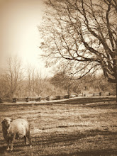 Photo: Sepia photo of a sheep and tree at Carriage Hill Metropark in Dayton, Ohio.