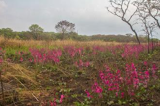 Photo: Septemberis springtime in Cangandala Setembroé primavera na Cangandala