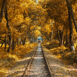 The Train by Topu Saha - Transportation Railway Tracks ( mymensingh, railroad, city, rail, tree, trees, rail road, street, bau, rail line, topu saha, garden, bangladesh agricultural university, autumn, railway, bangladesh, park, train,  )