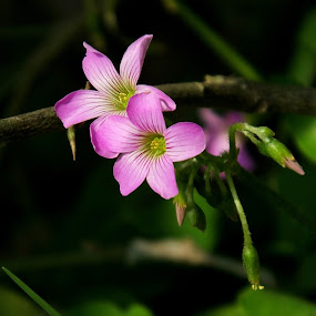 Cute Wild ! by Debartist Lightpainter - Flowers Flowers in the Wild