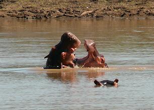 """Photo: """"... Jsem velice rád, že jsi tu se mnou, je tu dost hladovych krokodylů !..."""" v řece Zambezi / """"...I'm very happy you are her with me, a lot of hungry croccs swimming around!..."""" in Zambezi river"""