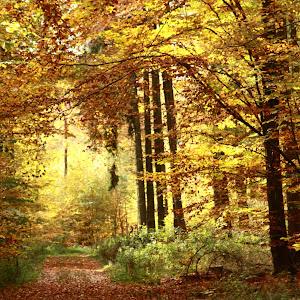 goldener Oktober.jpg