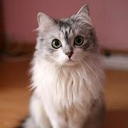 к чему снится белая кошка?