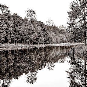 Symmetry  by Adriana Yampey - Landscapes Forests