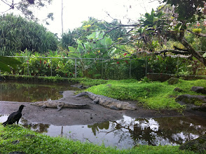 Photo: Crocodiles in Los Lagos zoo. They look exactly the same as they did in 2008, did they even move?
