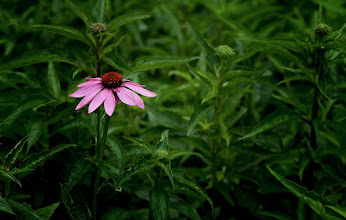 Photo: Tenderly... #flowerphotography  #floralfriday