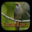Kicau Cucak Rowo Fighter Gacor icon