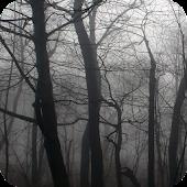 Dark Forest Live Wallpaper