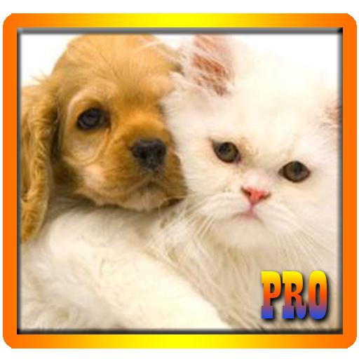 符合条件的狗和猫 解謎 App LOGO-APP試玩