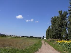 Photo: ポプラ並木と農場