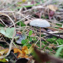 Pleated Ink Cap
