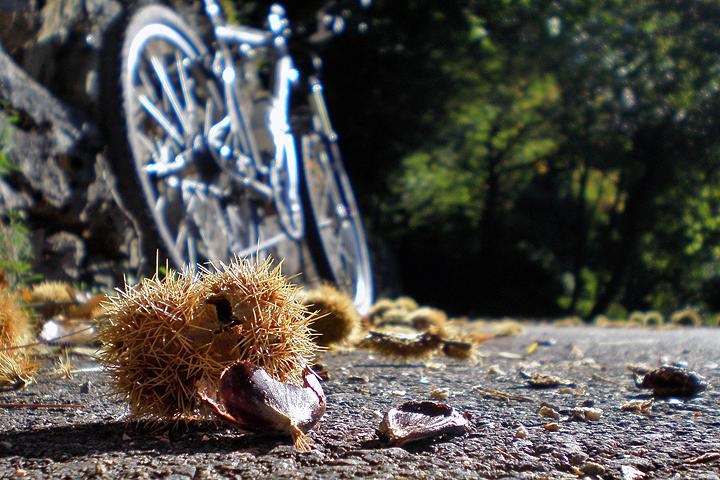 Autunno in bicicletta di Leobici