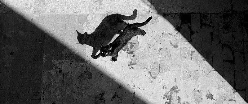 Le chat noir di Salvatore Gulino