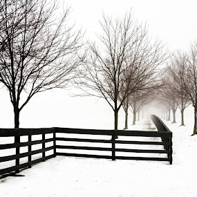 Fog After A storm by Dennis Granzow - Landscapes Weather ( winter, fog, black and white, snow, fence line )