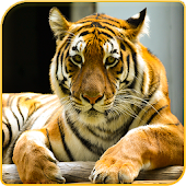 Tiger Wallpapers Offline
