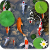 Fishes In Pond Live Wallpaper