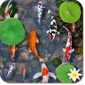 Fishes Aquarium Live Wallpaper