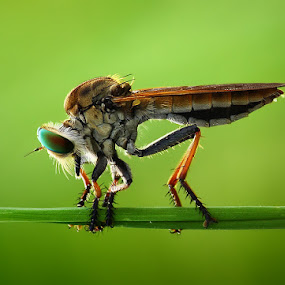 by Angga Putra - Animals Insects & Spiders