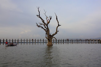 Photo: Year 2 Day 55 - Tree and Bridge