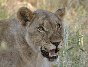 Photo: Madikwe Game Reserve, South Africa