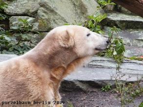 Photo: Knut praesentiert stolz die Pflanze ;-)