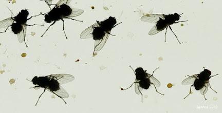 Photo: Versammlung der Fliegen