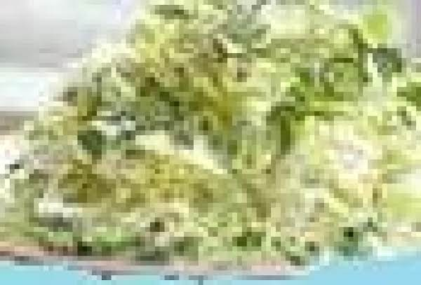 Lime Cilantro Coleslaw Recipe