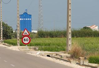 Photo: Egret crosses road